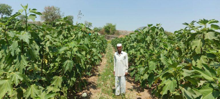 प्रयोगशील ..चार एकर शेतात फुलवली अंजीराची बाग ; जाचकवाडी येथील शेतकर्याचा यशस्वी प्रयोग