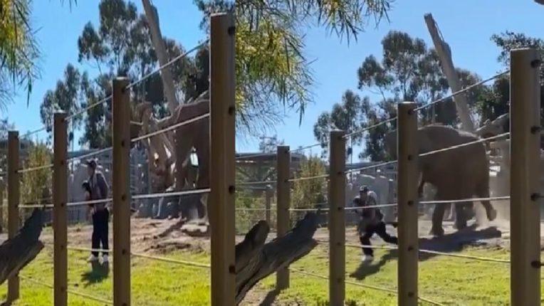 फोटो काढणं बेतलं जीवावर ! फोटो काढणाऱ्या बापलेकीला पाहून पिसाळला हत्ती आणि.., थरारक VIDEO व्हायरल