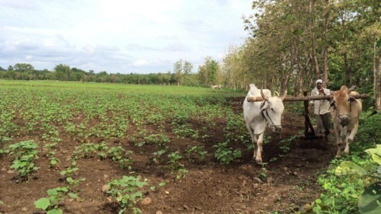 शेती करणे शेतकऱ्यांना झाले डोईजड; महागाईत वाढ पण उत्पन्नात घट