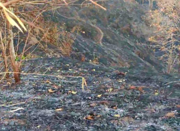 कौठवाडी येथे २५ एकर क्षेत्राला अचानक आग; शेकडो वृक्ष,सरपटणारे प्राणी आगीच्या भक्ष्यस्थानी