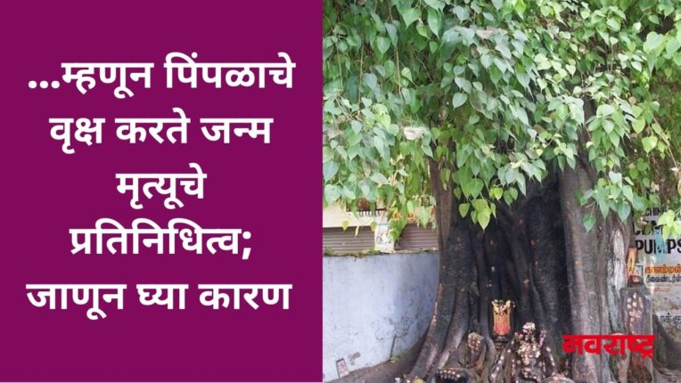 …म्हणून पिंपळाचे वृक्ष करते जन्म मृत्यूचे प्रतिनिधित्व; जाणून घ्या कारण