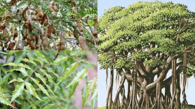 पर्यावरणास पूरक झाडे लावण्याची गरज; जीवशास्त्रज्ञ प्रा. कुशल सेनाड यांचे आवाहन