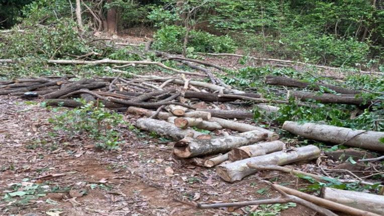 illegal wood cutting