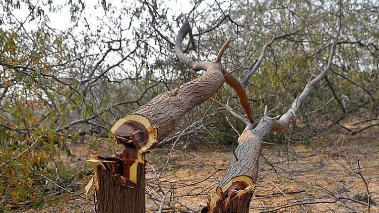 Shocking revelations in deforestation research; Loss of one tree per capita in India