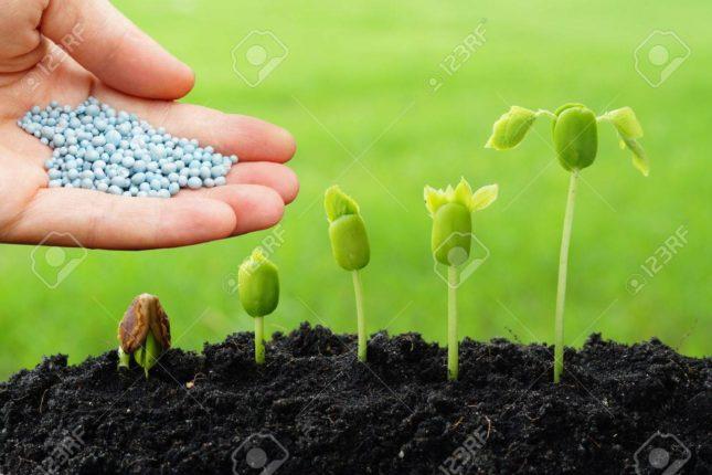 दृष्टिहीन बांधवांचा भविष्यातील ऑक्सिजन निर्मितीसाठी मोठे योगदान ; देशी झाडांच्या अडीच लाख सिडबॉलची निर्मिती