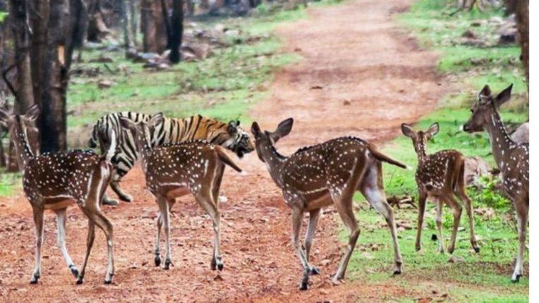 बुद्धपौर्णिमेला होणारी प्राणिगणना टळली; वन्यप्राणी न्याहाळण्याची परंपरेला फाटा, वन्यजीवप्रेमींच्या आनंदावर विरजण