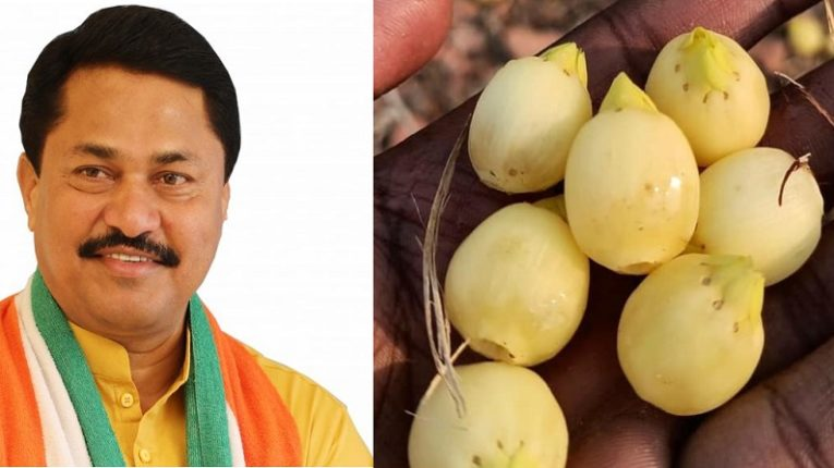Important decision of Maharashtra Vikas Aghadi government to lift restrictions on Mohful flowers .: Success of Nana Patole's long struggle of two decades.