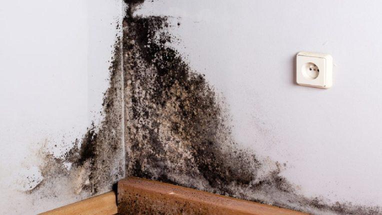 भिंतींच्या फटींमुळे काळ्या बुरशीचा प्रादुर्भाव वाढू शकतो : पावसामुळे वेगाने वाढू शकतो काळ्या बुरशीचा संसर्ग, घरात हवा खेळती ठेवा, या उपायांचा अवलंब करून ओलावा वाढण्यापासून मुक्ती मिळवा