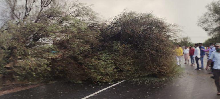 निमगाव केतकी परीसरात वादळी पाऊस ; झाडे उन्मळून पडल्याने बारामती- इंदापूर मार्गावरील वाहतूक ठप्प