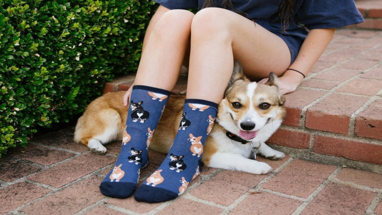 Corona patients will recognize dogs by the smell of socks