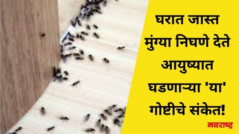 घरात जास्त मुंग्या निघणे देते आयुष्यात घडणाऱ्या 'या' गोष्टीचे संकेत!