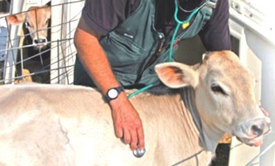 पशूवैद्यकांना प्राधान्याने प्रतिबंधात्मक लस द्यावी ; फ्रंटलाईन वर्करचा दर्जा देण्याचीमागणी