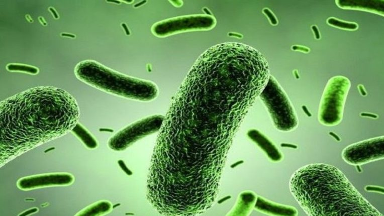 या देशात आणि या प्राण्यातून नवा भयंकर रोग पसरण्याची शक्यता; शास्त्रज्ञांनी शोधली पुढची महामारी