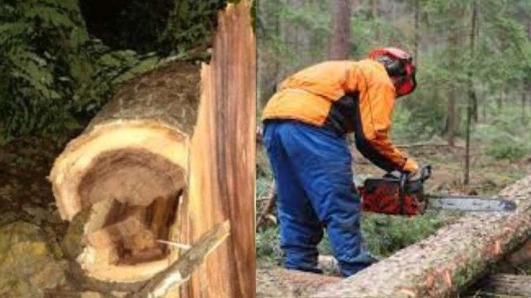 अजनीतील ४ हजार वृक्षांचे वय कसे तपासणार? नव्या शहरी वृक्ष कायद्यामुळे नवीन पेच