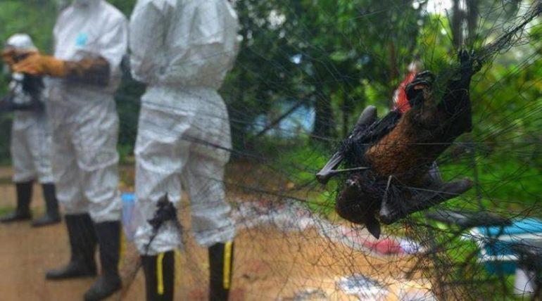 बापरे! कोरोनानंतर आता 'निपाह' व्हायरस ; महाराष्ट्रातील महाबळेश्वरमध्ये वटवाघुळांमध्ये आढळले निपाहचे विषाणू
