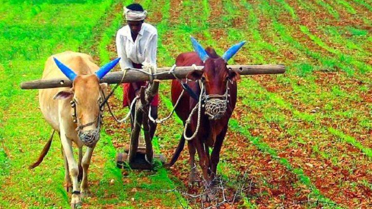 शेती समद्धी हीच काळाची गरज? बऱ्याच प्रश्नांचा तिढा अजून सुटणे बाकी असून यावर काळ हाच रामबाण उपाय आहे