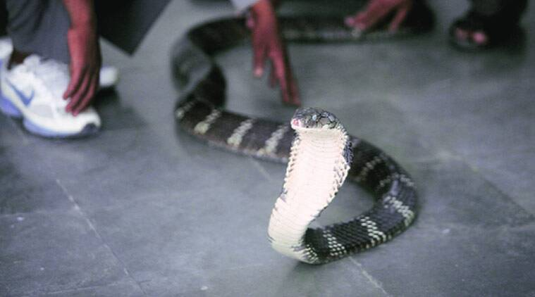 Do you want to keep snakes? It was a dangerous experience; He will not take the name of the snake again