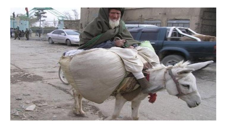 donkeys in pakistan