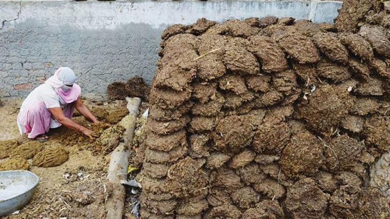 dung stolen in chattisgad
