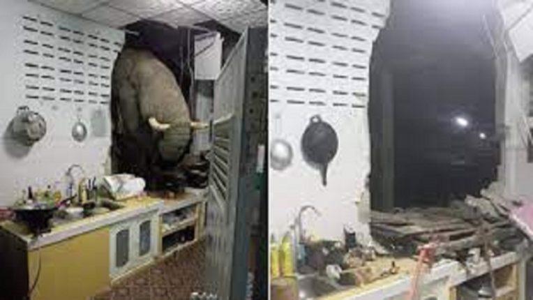 तो एवढा व्याकुळ झाला होता की, भूक अनावर झाल्याने हत्तीने तोडली किचनची भिंत; अन VIDEO झाला VIRAL