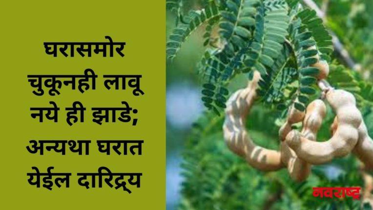 घरासमोर चुकूनही लावू नये ही झाडे; अन्यथा घरात येईल दारिद्र्य