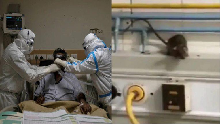उंदरानं डोळा कुरतडलेल्या रुग्णाचा मृत्यू, मुंबईच्या राजावाडी रुग्णालयात अखेरचा श्वास; मृत्यूचं कारण अद्यापही गुलदस्त्यातच