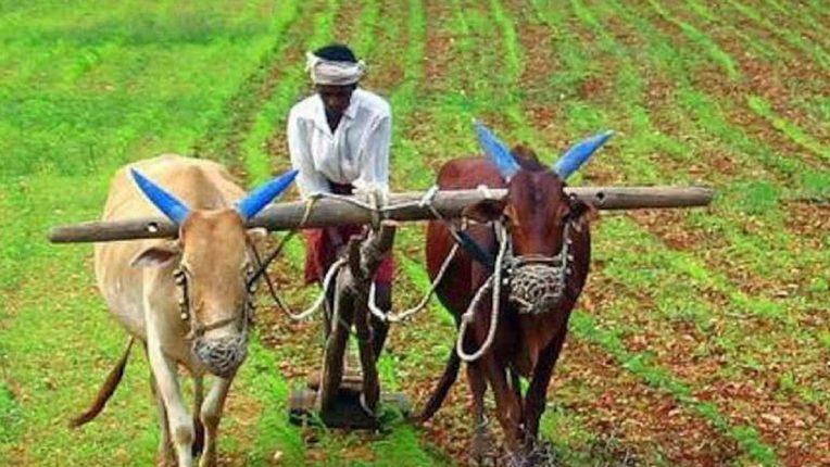 …तोपर्यंत बियाणांची पेरणी करु नये; कृषी विभागाचा शेतकऱ्यांना मोलाचा सल्ला