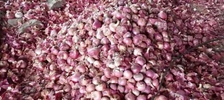 अज्ञात माथेफिरूने युरिया टाकला ; ६००क्विंटल कांद्याचे नुकसान