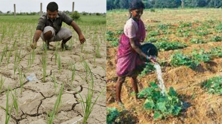 शेतकऱ्यांवर दुबार पेरणीचे संकट; पावसाने दडी मारल्याने पिकांना फटका