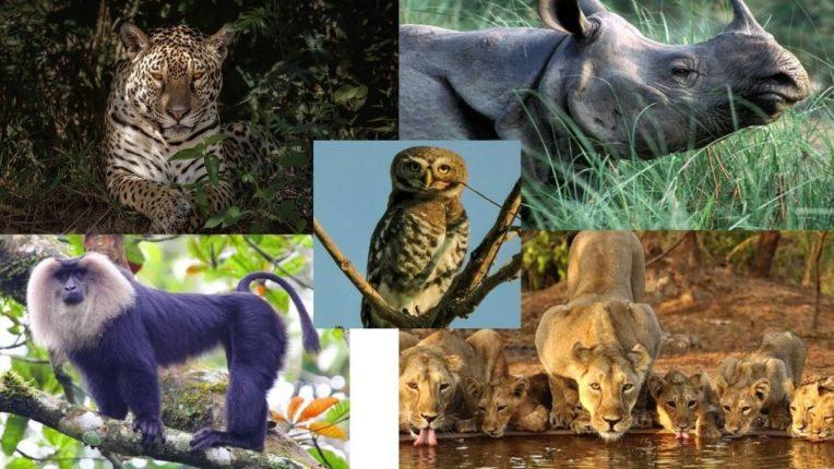 सुडबुद्धीने प्राण्यांची शिकार, स्थलीय आणि सागरी मांसाहारी प्रजाती प्रभावित