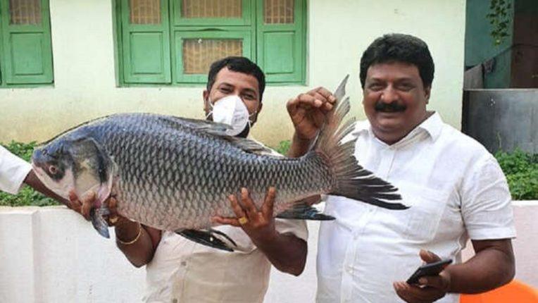 1250 kg fish, 1000 kg vegetables, 250 kg sweets, 10 goats; Strange gift given by the bride's father