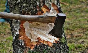 विनापरवाना झाड कापल्यावर होणार लाखाचा दंड !