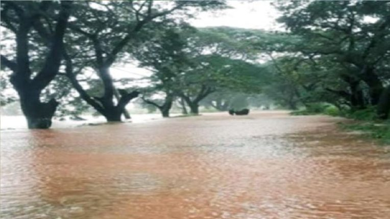 कोल्हापूर राष्ट्रीय महामार्ग पाण्याखाली ; फोंडाघाटात झाड कोसळून वाहतूक ठप्प