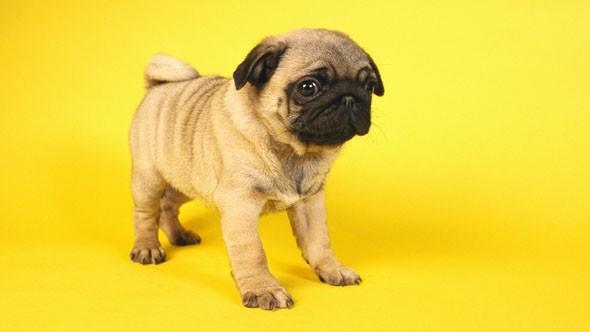 वाढदिवसाला कुत्र्याचे पिल्लू भेट देणे महिलेला पडले ६६ लाखांना ; फसवणूक होताच घेतली पोलिसात धाव