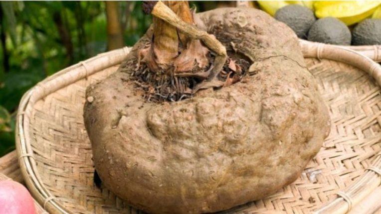 जमिनीखाली लागणारी 'ही' भाजी आहे असाध्य रोगांवर रामबाण उपाय