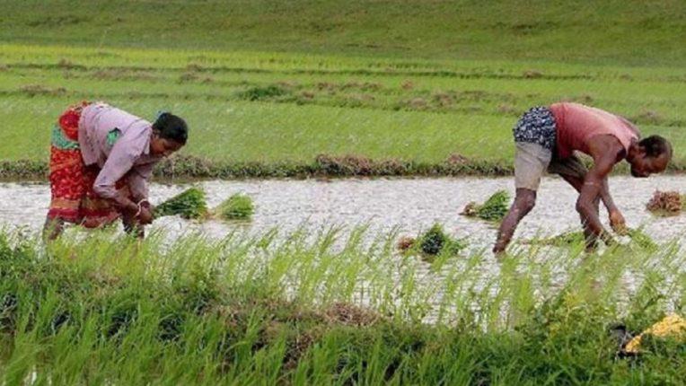 शेतकऱ्यांसमोर दुबार पेरणीचं संकट, आता 'या' तारखेपर्यंत पावसासाठी पाहावी लागणार वाट