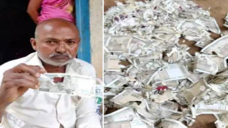 स्वत:च्या सर्जरीसाठी जमा केलेले २ लाख रुपये उंदरानं कुरतडले; शेतकरी हवालदिल, पेच सोडवणार कोण?