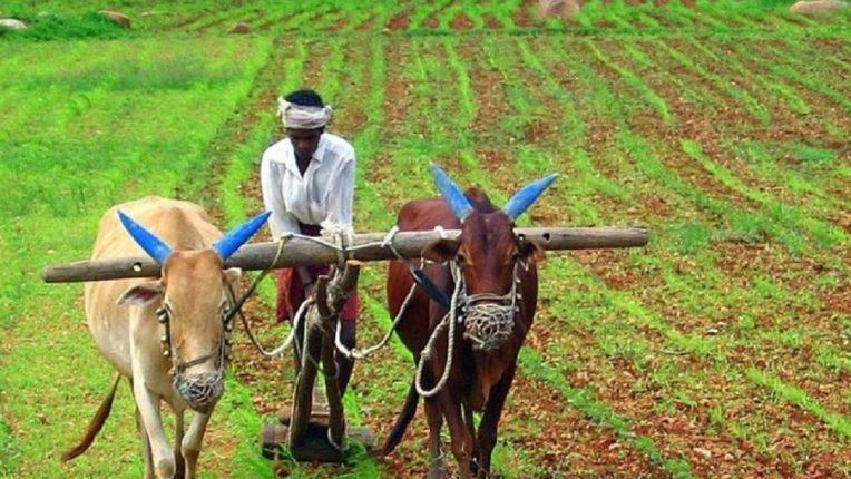 प्रधानमंत्री पीक विमा योजनेस 23 जुलैपर्यंत मुदतवाढ, महाराष्ट्रातील तब्बल 'इतक्या' लाखांहून अधिक शेतकरी सहभागी