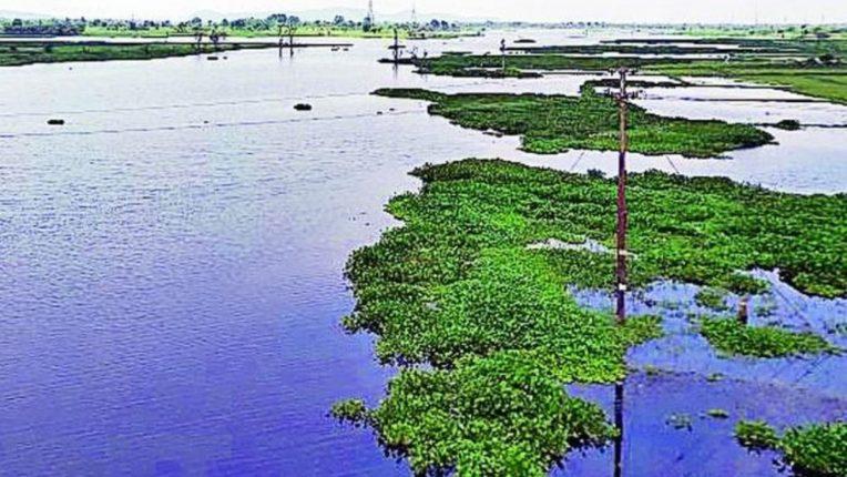भंडारा जिल्ह्यातील तलावात निम्म्यापेक्षाही कमी जलसाठा; प्रशासनाच्या चिंतेत वाढ