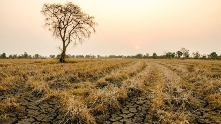 अर्ध्या महाराष्ट्राला पावसाची प्रतीक्षा! ऑगस्ट संपण्याच्या वाटेवर; शेतकरी चिंताग्रस्त