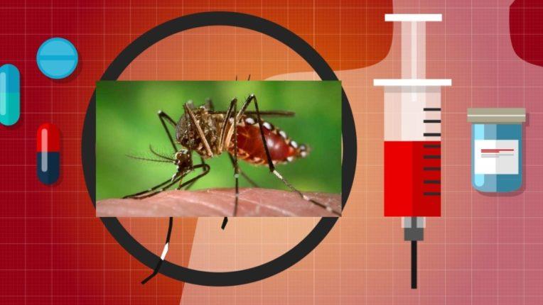 चंद्रपूर जिल्ह्यात डेंग्यूचा कहर; जुलैत १०५ रुग्णांचा मृत्यू