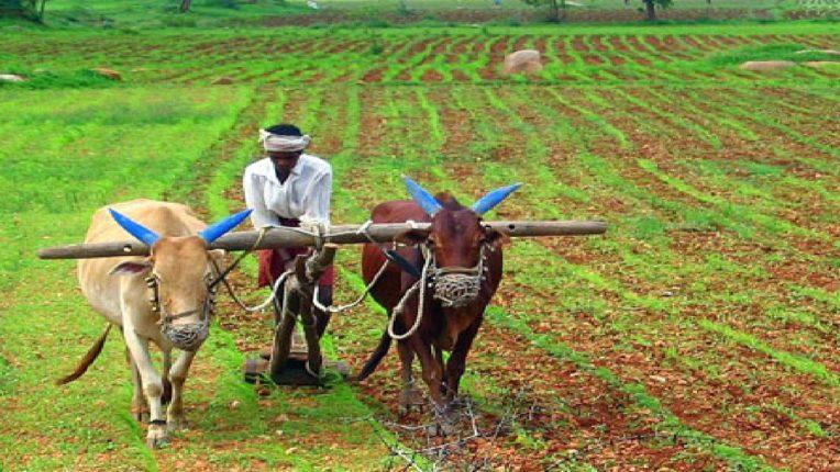 बळीराजाची अवस्था आगीतून फुफाट्यात, गांजा लावण्याची परवानगी द्या; शेतकऱ्याची मागणी