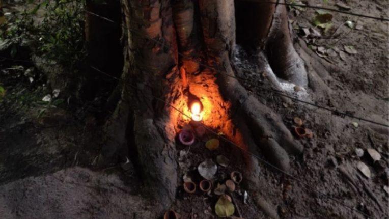 शनिवारी पिंपळाच्या वृक्षाखाली लावा दिवा; मिळतील अद्भुत फायदे