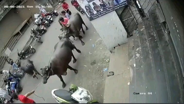 रस्त्याने जाताना अचानक म्हैस बिथरली अन दुचाकीस्वारासोबत घडली Shocking  घटना