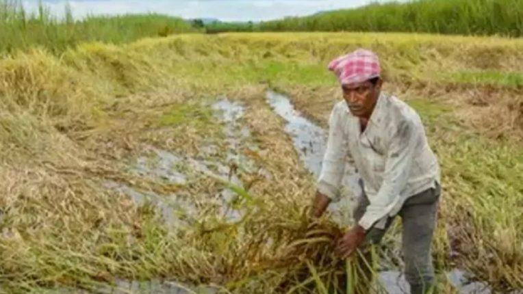 शेतकऱ्यांना मोठा दिलासा, पिक विमाधारकांना २५ टक्के आगाऊ नुकसान भरपाईचा अध्यादेश जारी
