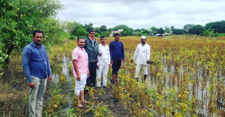 कसं जगायचं शेतकऱ्याने ? बार्शी तालुक्यात पावसामुळे सोयाबीनचे मोठे नुकसान