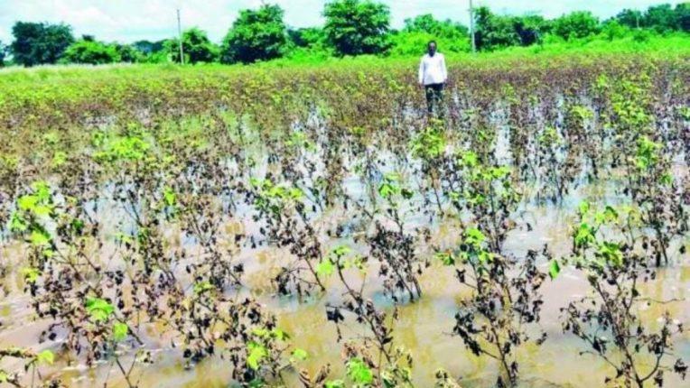 सततच्या पावसामुळे ५४ गावातील पीक धोक्यात; शेतात पाणी आणि चिखलाचा खच