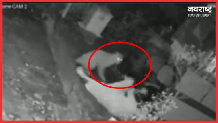 महिलेवर बिबट्याचा हल्ला, घटना सीसीटीव्हीत कैद