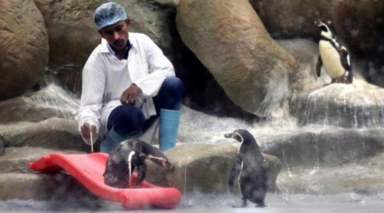 Aditya Thackeray's idea is very expensive; The cost of one day's maintenance of a penguin is equal to one worker's monthly salary