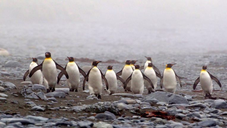 काय सांगता! हा तुमचा भ्रम आहे भ्रम; ज्यांना आपण समजतो आहोत पेंग्विन ते आहेत Aliens?, मिळालेत अन्य ग्रहाशी कनेक्शनचे पुरावे; जाणून घ्या नेमकं प्रकरण